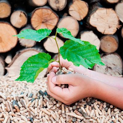Energía sustentable Biomasa